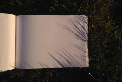 Drawings of the shadows of grass blades